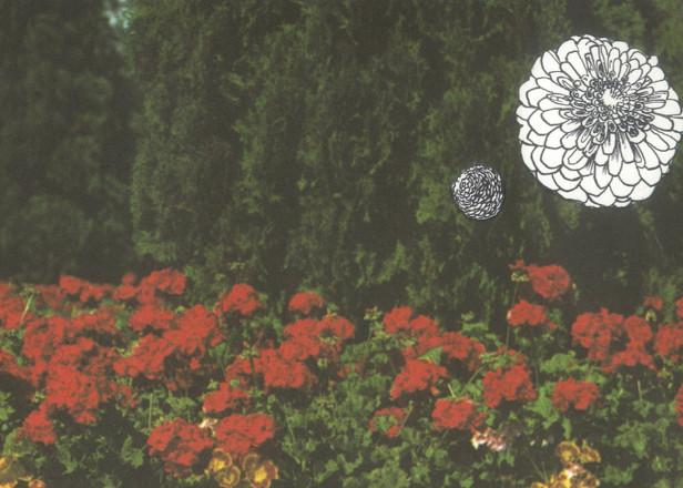 Emeralds' John Elliott returns with Imaginary Softwoods album